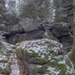 Moose auf Stein