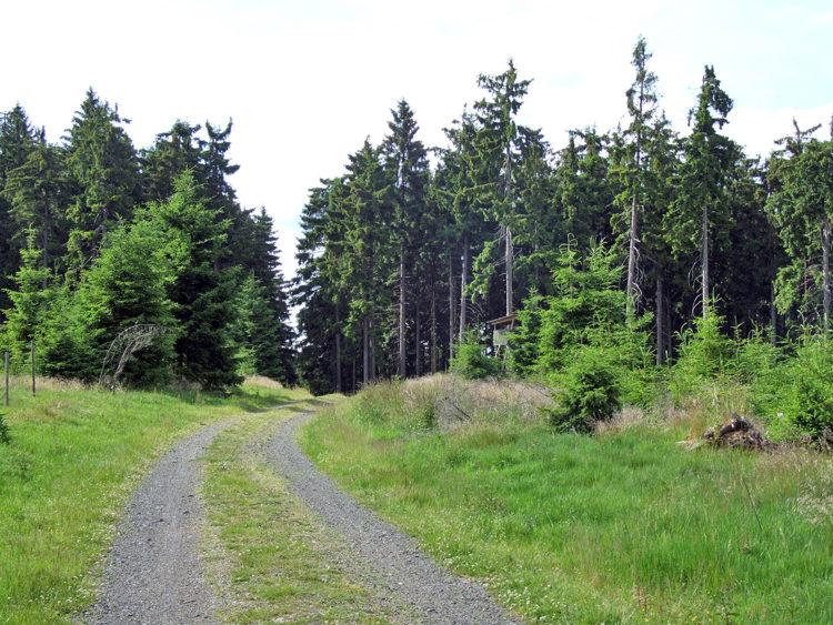 Birkenberg, 744m
