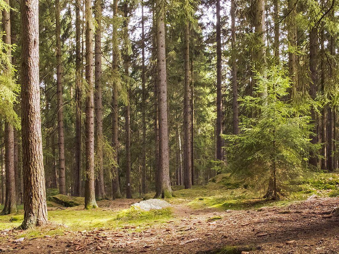 Im Wald Ringelfelsen Rinnlstein