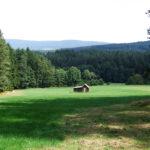 Holzwiese
