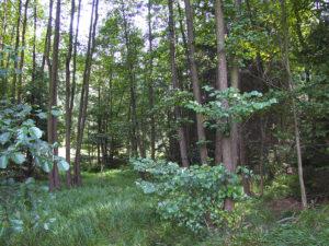 Brunnenlohe