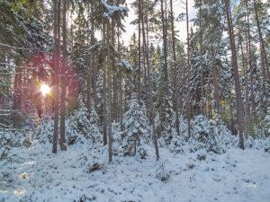Im Winterwalde