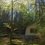 ... und Sonntags in den Wald